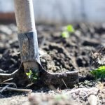 The Ultimate Guide to Shovels