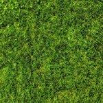 Types of Grass (Australian Guide)